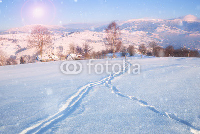 Fotoboard na płycie - Beautiful winter landscape with snow covered trees